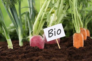 L'agriculture biologique au service de l'économie locale