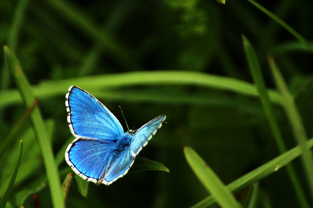 Projet de loi biodiversité : ce qui va changer pour les communes