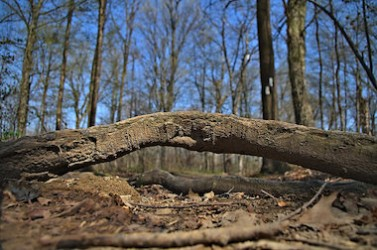 obstacle dans un bois