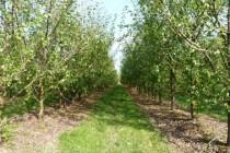 nègrepelisse arbres CCTVA