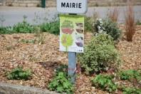 ZEROPHYTO-MAIRIE