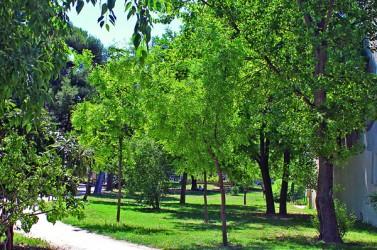 Montpellier parc Clemenceau