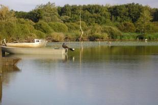Lac-de-grand-lieu-2