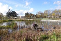 faucardage parc François-Mitterrand Cergy3