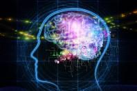 Cerveau_humain_connecte