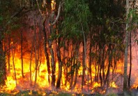 Grands incendies de forêt : des pistes pour mieux gérer le risque à l'avenir