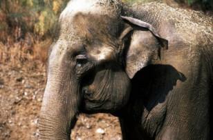 Les cirques avec animaux ont-ils encore droit de cité ?