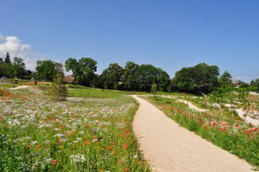 Les pelouses fleuries sont esthétiques, demandent peu d'entretien et favorisent la biodiversité.