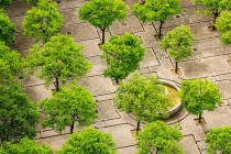 tree-1817469_960_720