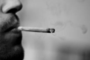 joint cannabis toxicomanie