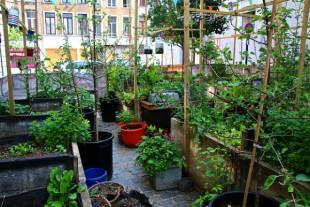 Bruxelles - jardin urbain de poche