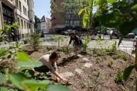 A Strasbourg, les habitants s'approprient les jardins de rue.