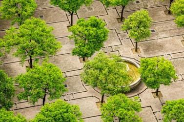 arbre en ville-une-600-400