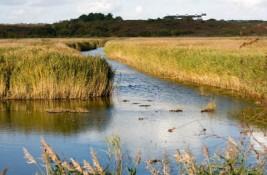 Dossier : Zones humides : vers une réhabilitation sur le long cours