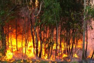 Feux de forêt : comment éviter le scénario du pire