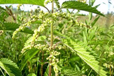 Plantes invasives : un état des lieux inquiétant