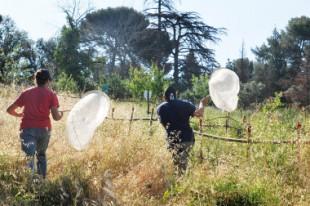 Photo1 - Les jardins à pap font l'objet d'une évaluation par comptage réalisé par des étudiants © sguillermain-Ville Marseille