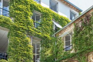 En matière de végétalisation verticale, la solution rustique de la vigne vierge se montre efficace pour rafraîchir les espaces intérieurs. -