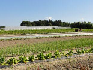 La métropole d'Orléans a installé une demi-douzaine de maraîchers en agriculture biologique depuis 2012.