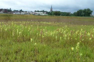 verdissement des sols Wattrelos