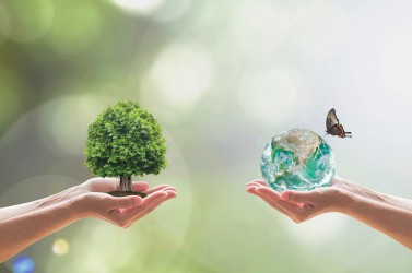 Green world and Tree of life growing in clean environment on volunteer's hand for sustainable ecology concept. Element of this image furnished by NASA
