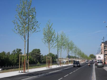 En laissant plus d'espace aux arbres, Orléans Métropole choisit de les laisser se développer plus largement et en port libre.