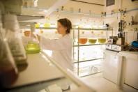 Le pôle mer Bretagne Atlantique mène notamment des expérimentations pour transformer des algues à destination de l'agroalimentaire.