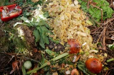 biodechets-restes-alimentaires-dechets-ecologie-tri