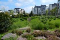 Chantepie-ZACRivesduBlosne-jardin de pluie