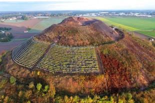 les vignes de Charbonnay (sic) de Oncle Bacchus