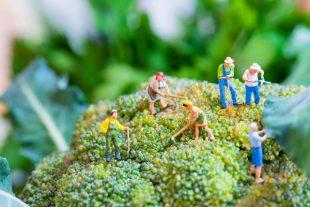 Les variétés anciennes de légumes ont de l'avenir