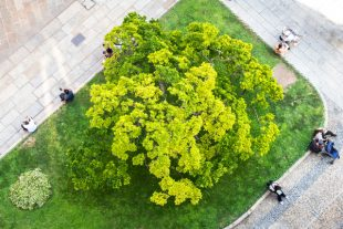 arbres-ville