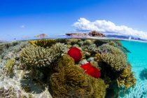 Le nouvel Office français de la biodiversité (OFB) dispose d'un très large panel de compétences, dont la protection des récifs coralliens, gravement menacés (ici, à Mayotte).