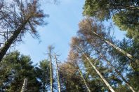 thema-foret