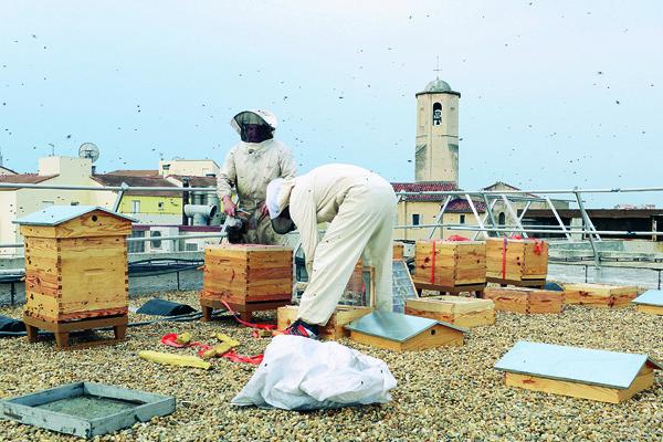 Des abeilles en ville