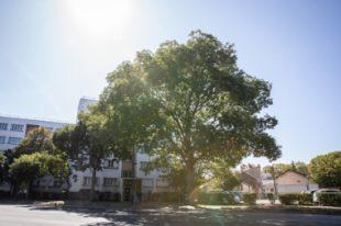 Photos d'alignements d'arbres et d'arbres remarquables dans le secteur nord du département.
