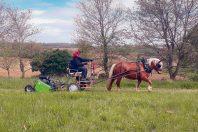 Entretien d'espaces verts par traction animale