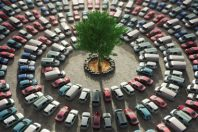 green tree surrounded by cars