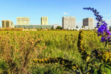 A Stains, sur la ZAC des Tartres, terre historiquement maraîchère, une filière économique va se créer, de la production des denrées au traitement des déchets.