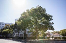 Dossier : En ville aussi l'arbre prend racine