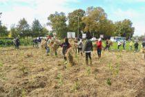 Urban Forests - plantation participative 2