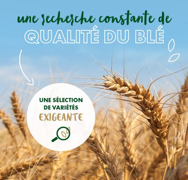 visuels-article-blé-FR-v4_qualité-blé