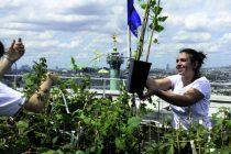 Les toits de l'Opéra-Bastille accueillent 2 500 m2 de plantations maraîchères destinées aux salariés de l'opéra, aux habitants et à certains restaurants du quartier.