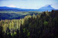 Forêt_résineux