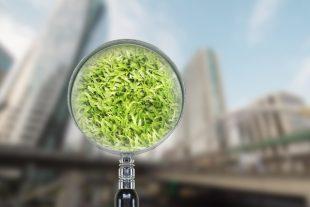 Le vert en ville