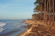 La forêt fournit un ensemble de services pas toujours bien reconnus : protection contre les aléas naturels (glissements de terrains, érosion littorale), augmentation de la disponibilité en eau, filtration des polluants, conservation des sols, etc.