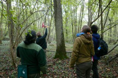 Repérage arbres Villarceaux