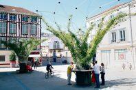 Les corolles végétales d'Urban canopee