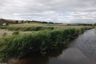 2 photos du marais de Kervigen.  Le marais de Kervigen est un site naturel de 22 hectares, situŽ sur les communes de PloŽven et Plomodiern, dans le Finistre. Le marais est composŽ majoritairement dÕune roselire