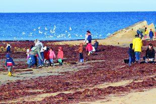 Les élèves acquièrent des connaissances sur la biodiversité, les espèces invasives, les milieux naturels, l'écocitoyenneté…